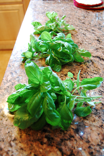 basil5