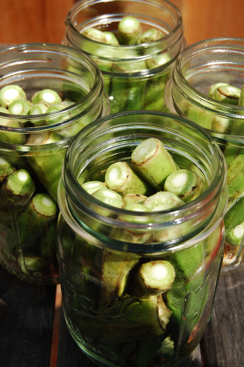 Pickled Okra - biscuits and such