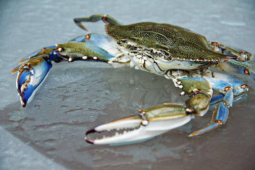 how to eat a whole blue crab