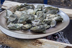 onslow oysters 3