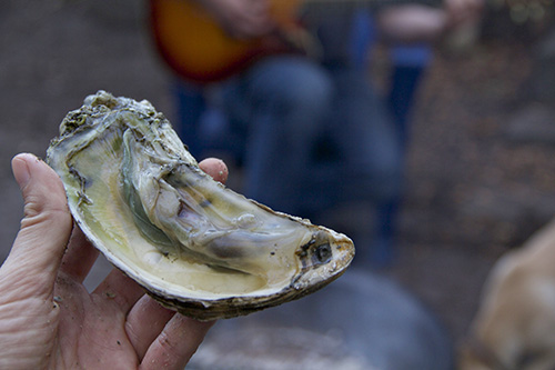 onslow oysters 5