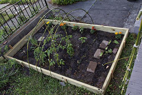 ilm garden 10