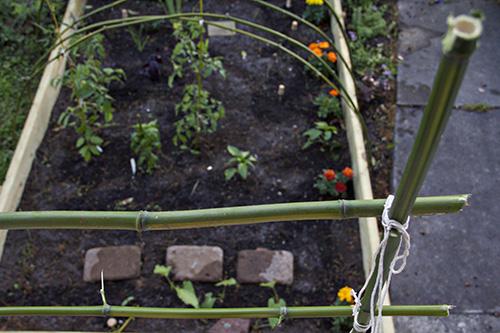 ilm garden 12