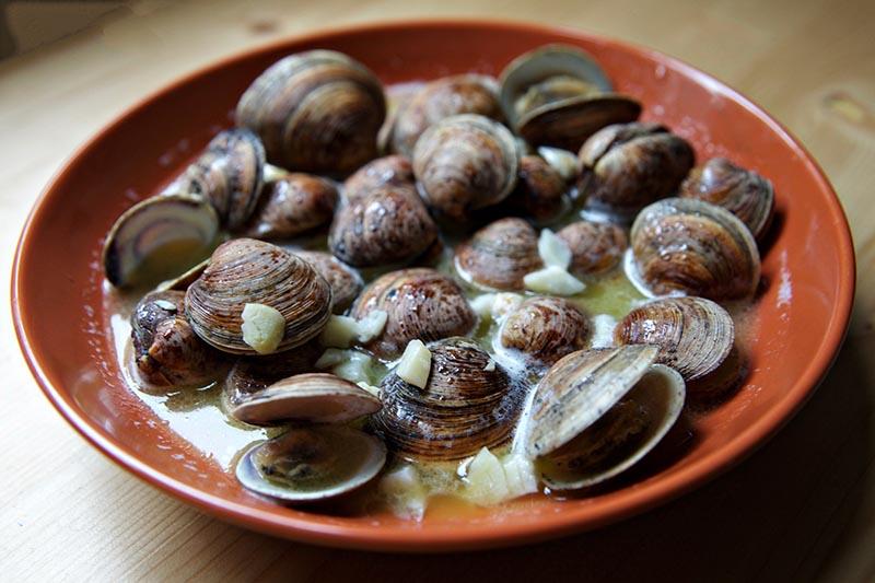 clams 2
