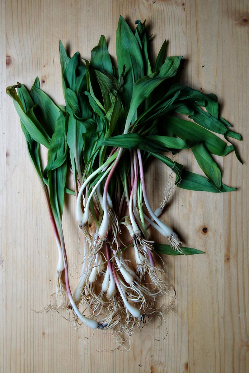 grilled ramps 1