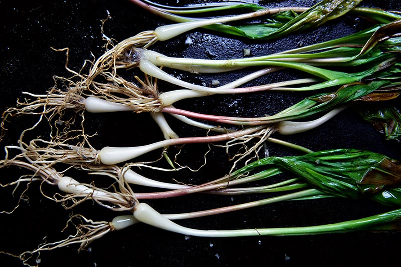 grilled ramps 4