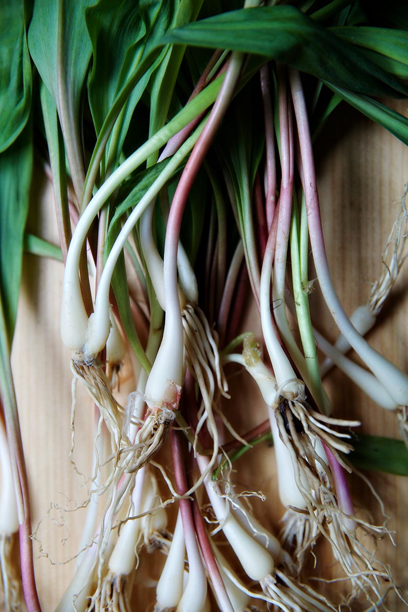 grilled ramps 5